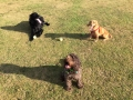 Bear, Bow and Alfie